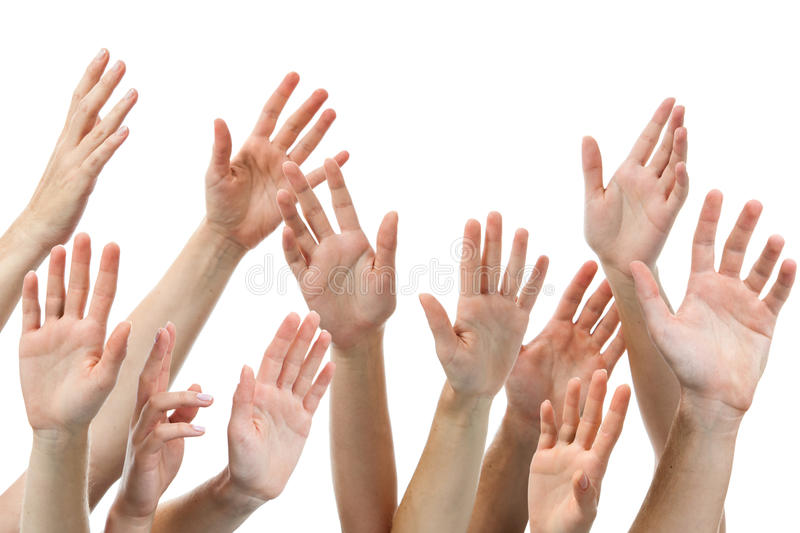 Human hands raised. Close-up of several human hands raised on white background royalty free stock photography