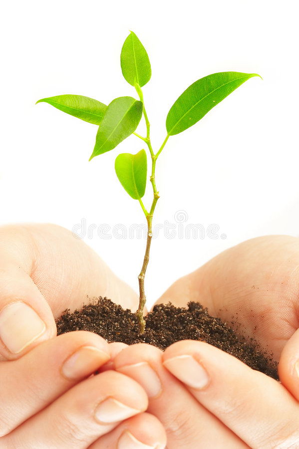 Download Human Hands And Young Plant Stock Image - Image: 2349309