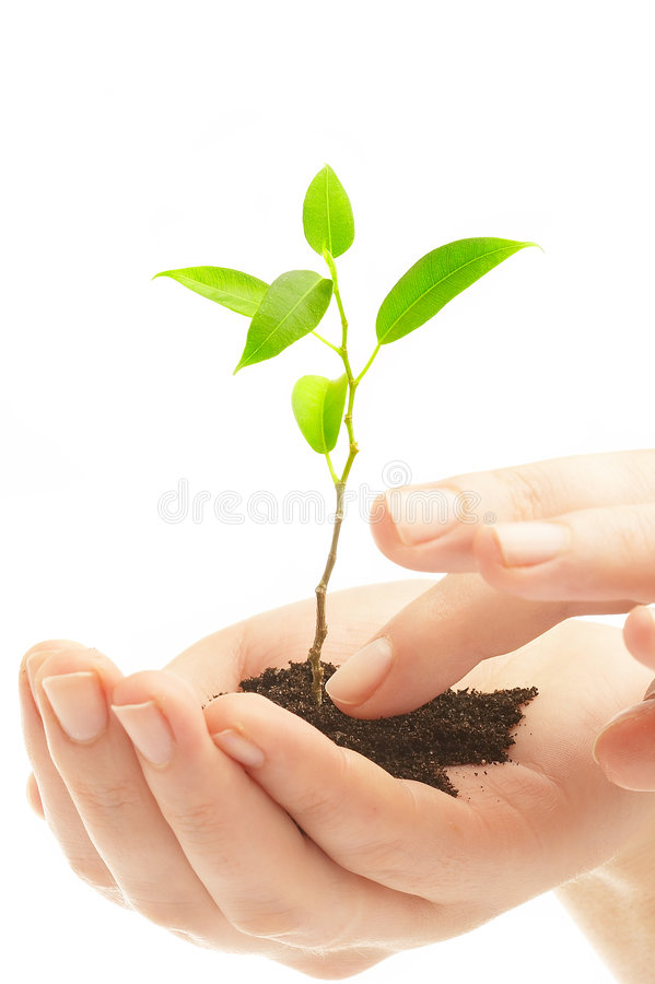 Download Human Hands And Young Plant Stock Photo - Image: 2349322