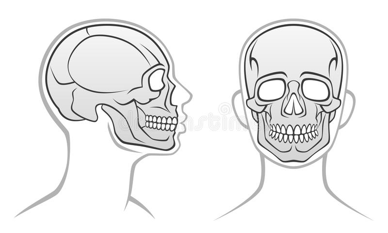 Human head royalty free illustration