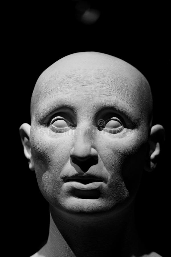 Human head model. A bust of a generic caucasian human head stock images