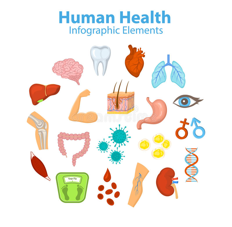 Human Health Infographic Elements Objects. vector illustration