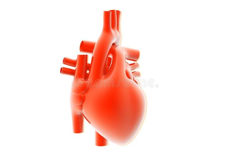 Download Human heart stock illustration. Image of test, medicine - 26431685