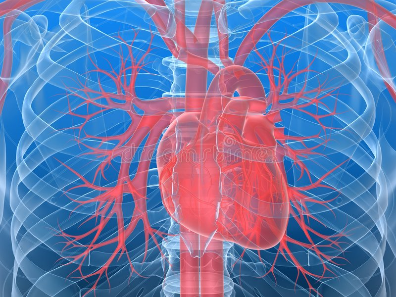 Download Human Heart Stock Photo - Image: 8691270