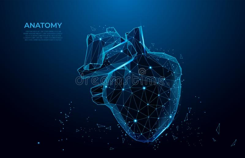 Human heart anatomy form lines and triangles. Polygonal 3D human organ on blue background. mesh art. Human heart anatomy form lines and triangles. Polygonal 3D stock illustration