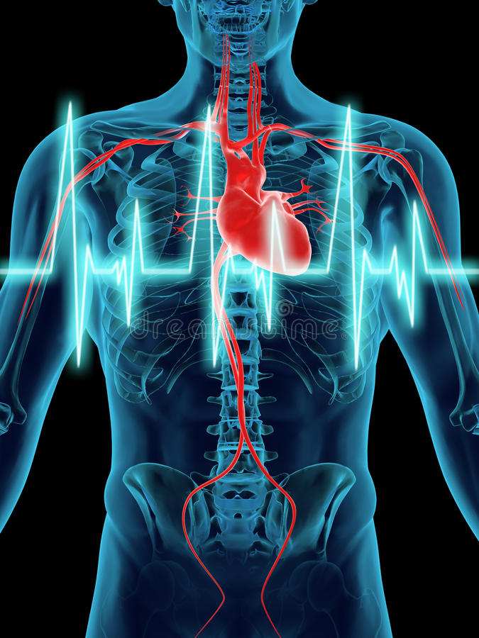 Free Human Heart Beat Stock Images - 22332904