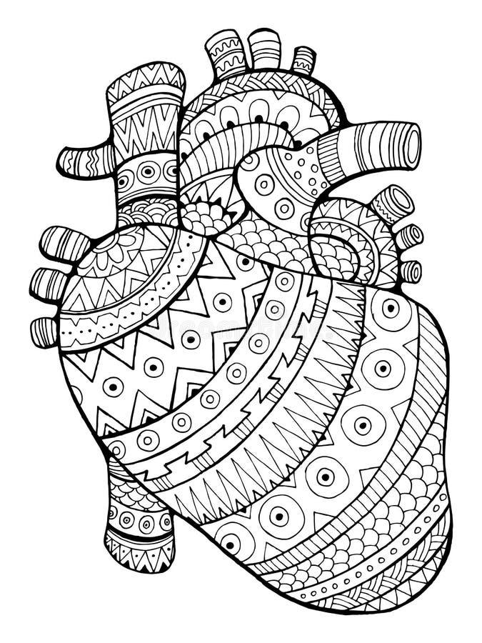 Download Human Heart Coloring Book Vector Illustration Stock