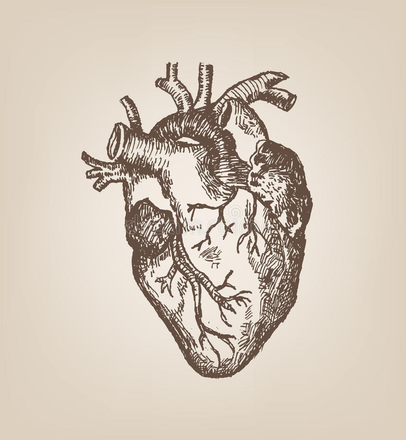 Human Heart Hand Sketch Style. Vintage Editable Clip Art ...
