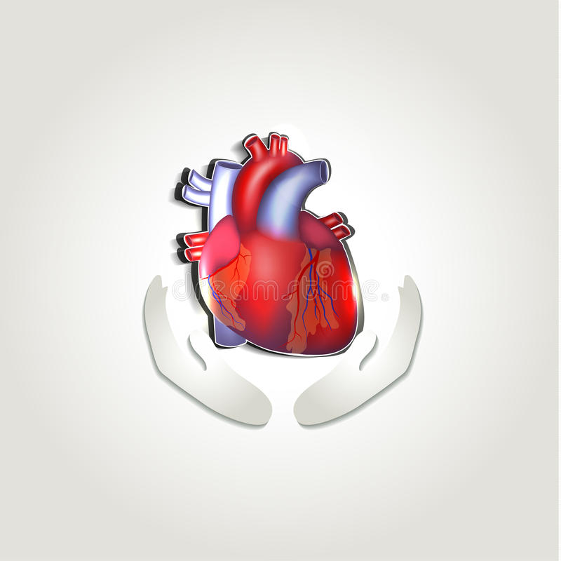 Human heart health care symbol royalty free illustration