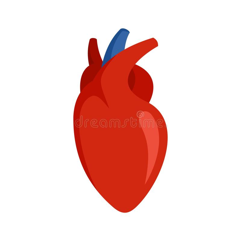 Human heart icon, flat style. Human heart icon. Flat illustration of human heart vector icon for web design stock illustration