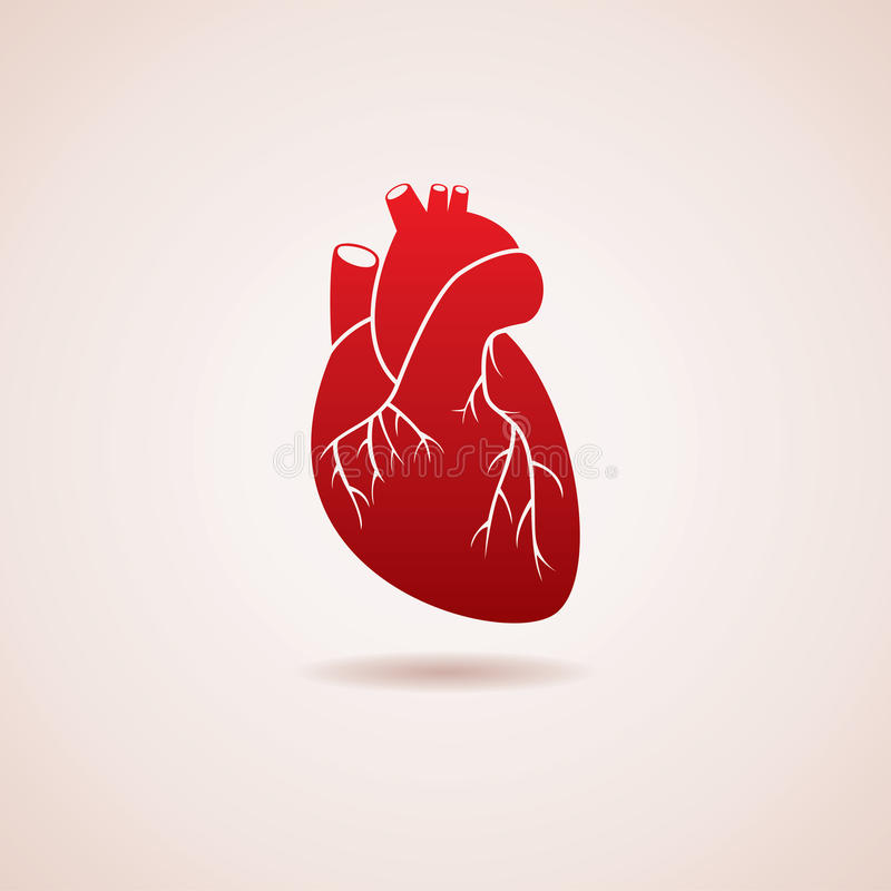 vector human heart icon stock vector illustration of cardiovascular rh dreamstime com human heart vector png human heart vector icon