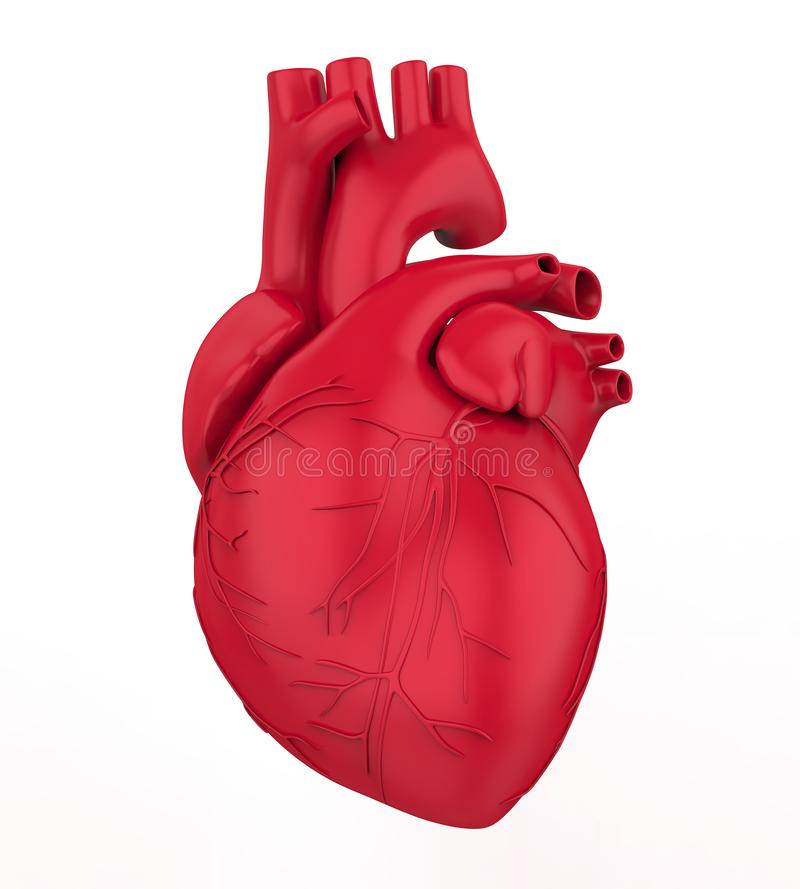 Human Heart Isolated. On white background. 3D render vector illustration