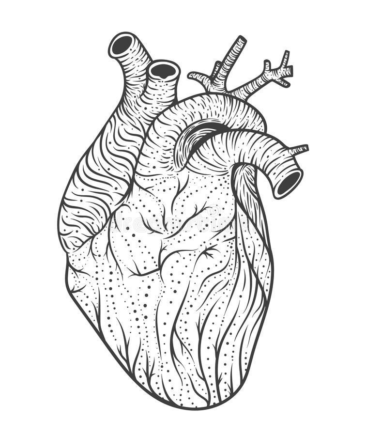 Heart Tattoo Line Drawing : List of synonyms and antonyms the word human heart