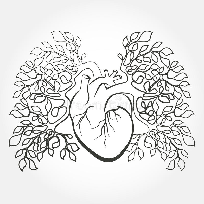 Human heart and lungs stock vector. Illustration of cardiology ...