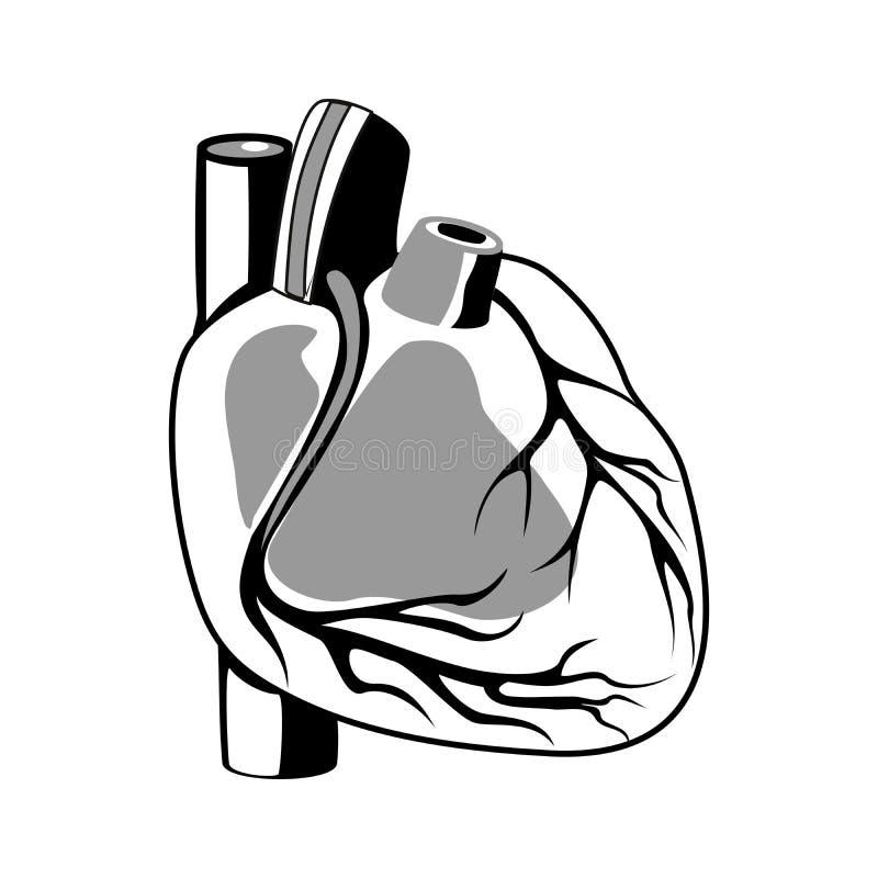 Human heart outline stock illustration. Illustration of scientific ...