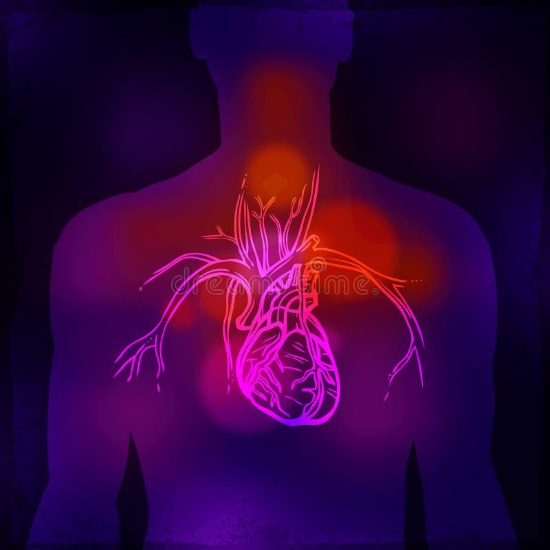 Human Heart X-ray royalty free illustration
