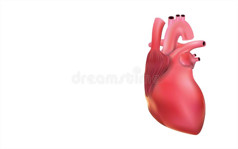 Human heart show powder is a 3D image. royalty free illustration