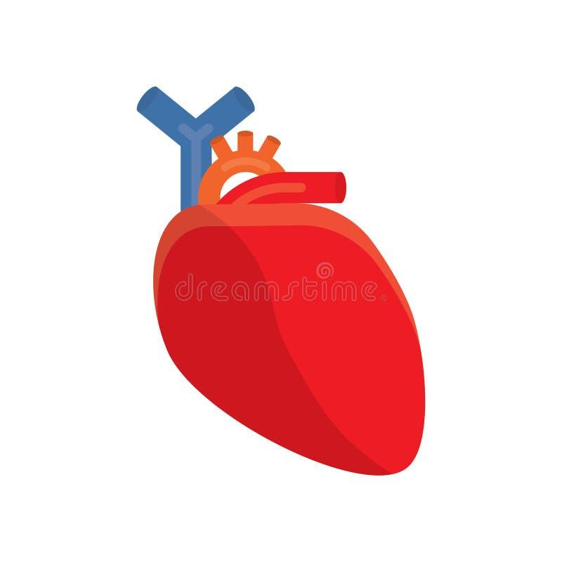 human heart vector illustration stock vector illustration of rh dreamstime com human heart vector image human heart vector art