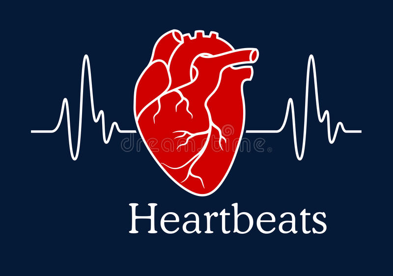 Human heart with white heartbeats cardiogram. Health care concept depicting human heart with white wavy line of heartbeats cardiogram on dark blue background royalty free illustration