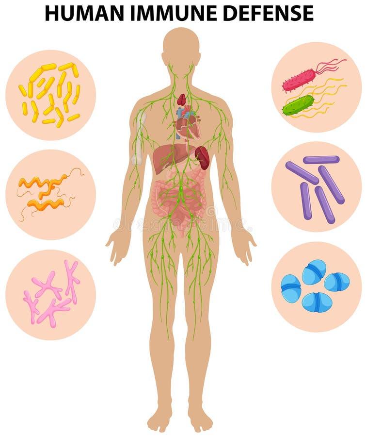 Human immune defense diagram. Illustration stock illustration