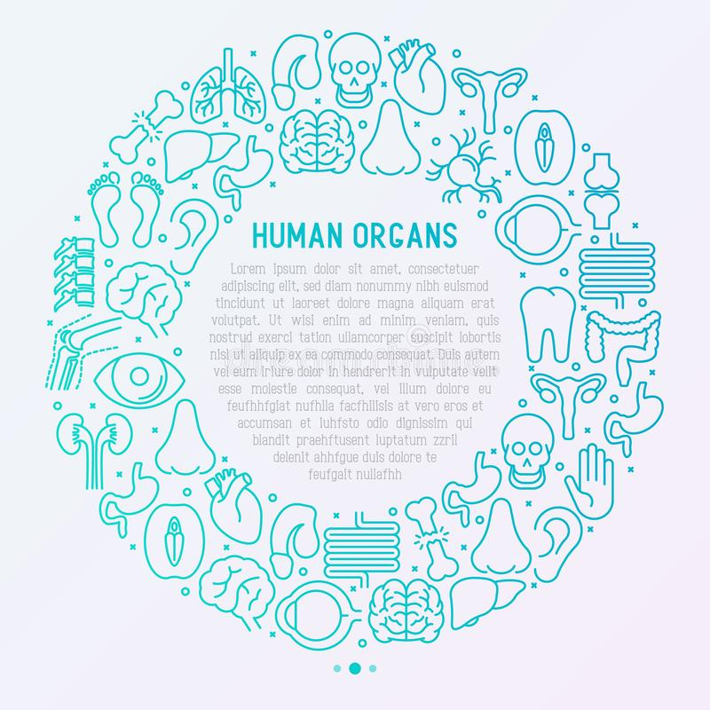 Human internal organs concept in circle. With thin line icons. Vector illustration for banner, web page, print media vector illustration
