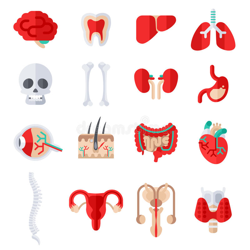 Human Internal Organs Flat Icons Set Stock Vector - Illustration of ...
