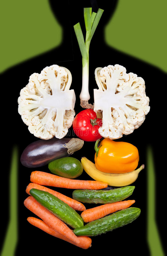 Human internal organs lined with vegetables. Human internal organs lined with different vegetables royalty free stock photos