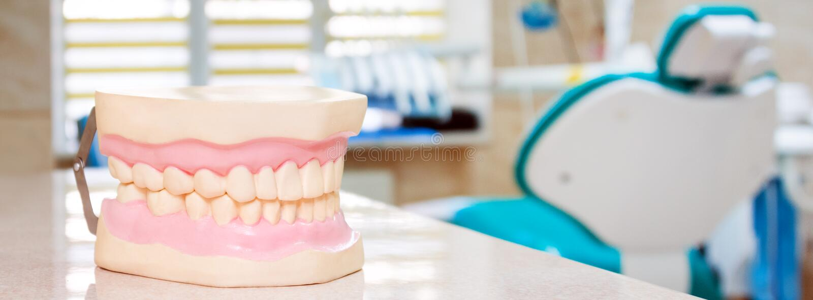 Human jaw models at a dentist office, teeth care and prosthetics concept. Artificial plastic jaw model for demonstrating. Dental care rules to patients stock image