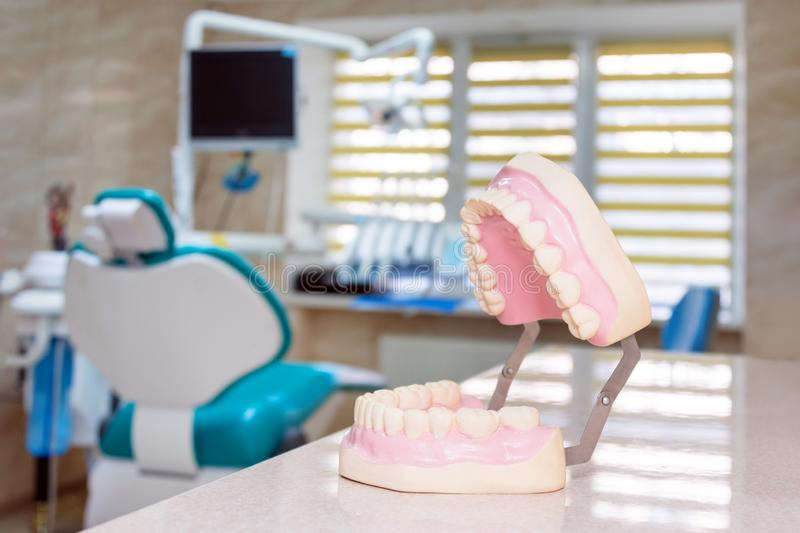 Human jaw models at a dentist office, teeth care and prosthetics concept. Artificial plastic jaw model for demonstrating. Dental care rules to patients royalty free stock photo