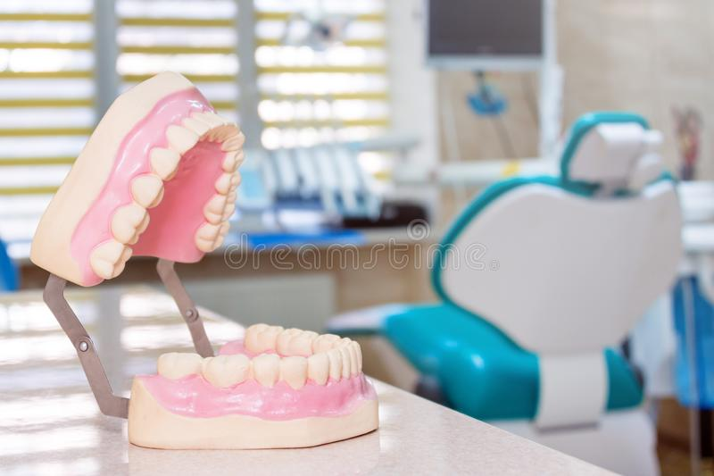 Human jaw models at a dentist office, teeth care and prosthetics concept. Artificial plastic jaw model for demonstrating. Dental care rules to patients stock photo