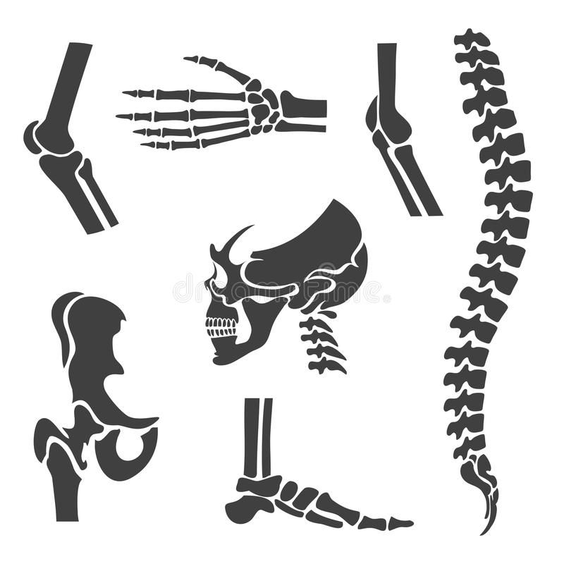 Human joints vector set. Orthopedic and spine. Symbols. Elbow and knee, wrist and rehabilitation, hand and backbone illustration stock illustration