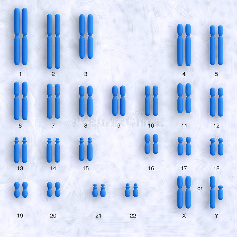 Download Human karyotype stock illustration. Image of heredity - 21387484
