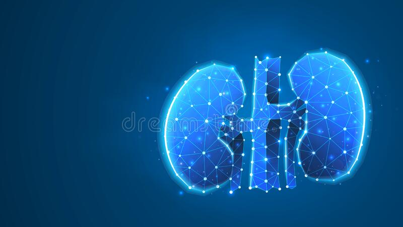 Human kidneys. Adult body anatomy, health biology, internal world of people. Low poly, wireframe 3d vector illustration. Abstract. Polygonal image on blue neon royalty free illustration
