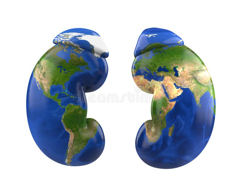 Human Kidneys with World Map. World Kidney Day Concept vector illustration