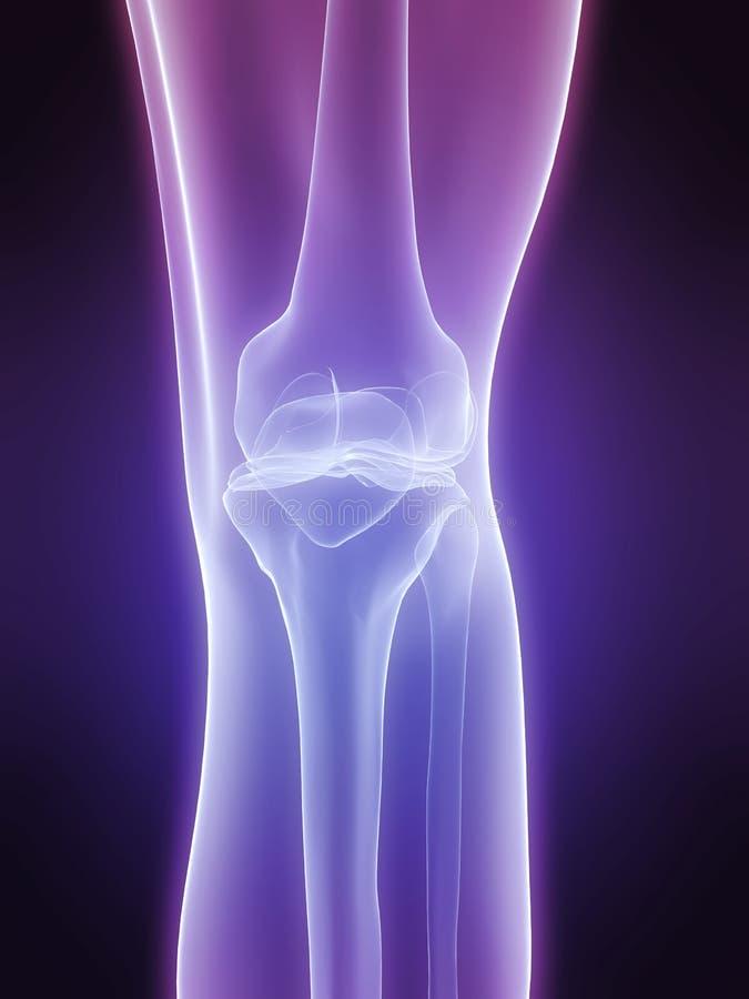 Download Human knee stock illustration. Illustration of biological - 7750066