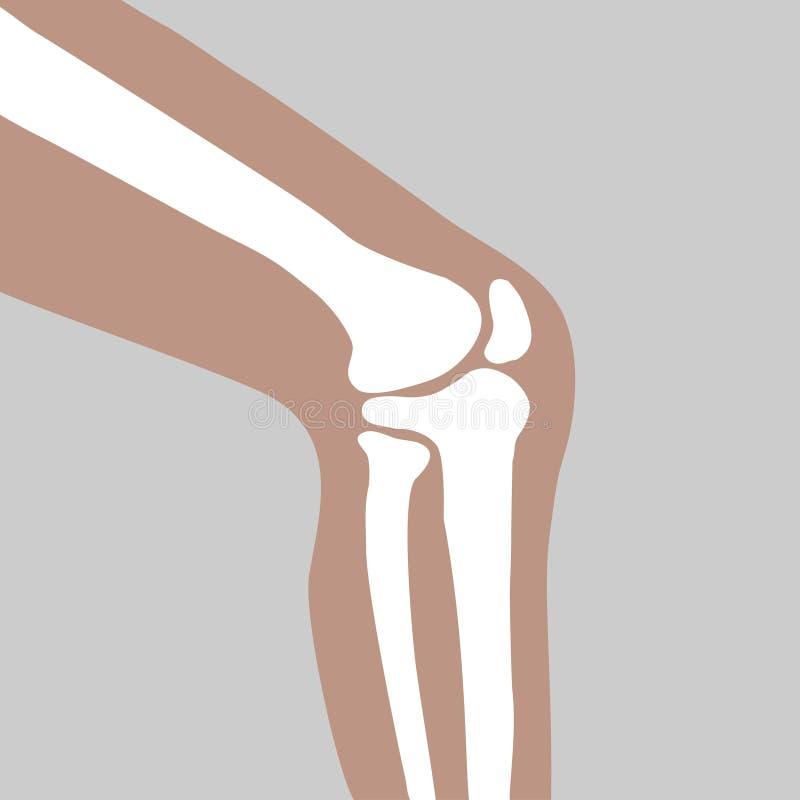 Human knee joint stock illustration