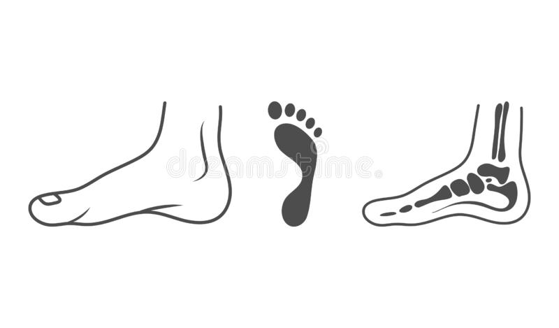 Human Leg, Ankle, Bones, Footprint, Organs Concept. Vector Illustration Can Be Used For Topics Like Anatomy, Medicine royalty free illustration