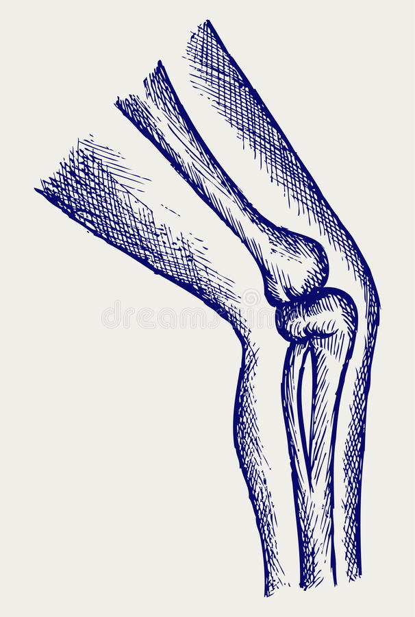 Human leg bones royalty free illustration