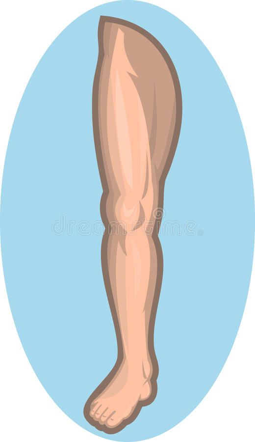 Human leg facing front. Illustration of a Human leg facing front isolated on blue background stock illustration