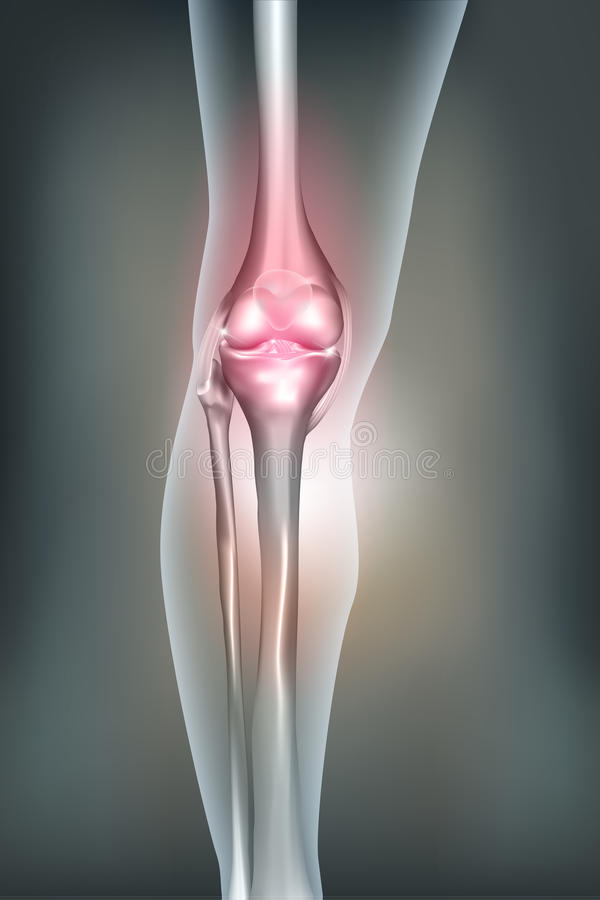 Human leg, knee anatomy vector illustration
