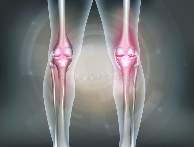 Human legs and knee joint stock illustration
