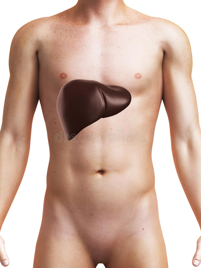 Download Human Liver Stock Images - Image: 20059144