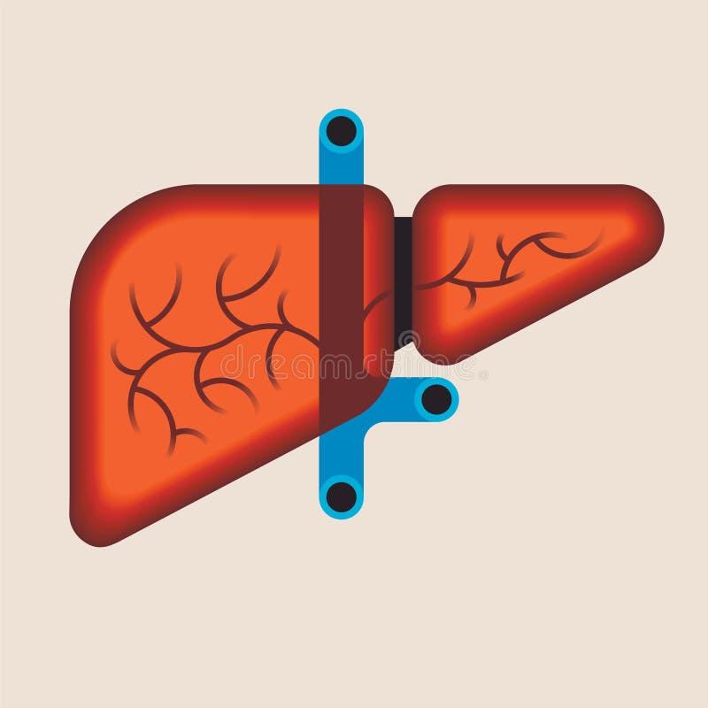 Human liver anatomy. Medical science vector illustration. Internal organ: gallbladder, and portal vein, hepatic duct royalty free illustration