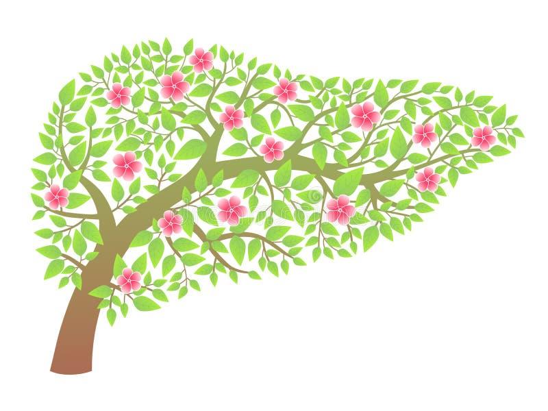Human liver healthy stock illustration