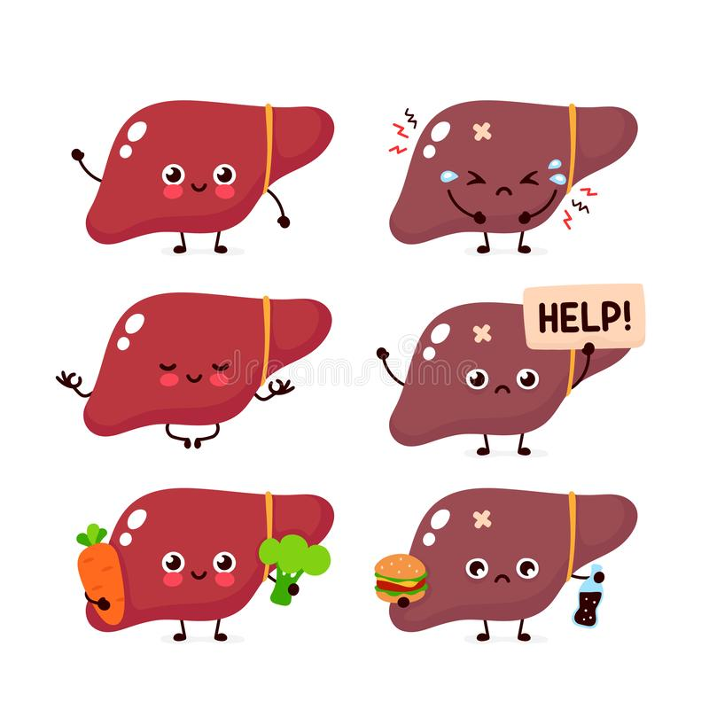 Human liver organ set collection. Vector. Modern style cartoon character illustration icon. Isolated on white background. Unhealthy,healthy nutrition,liver vector illustration