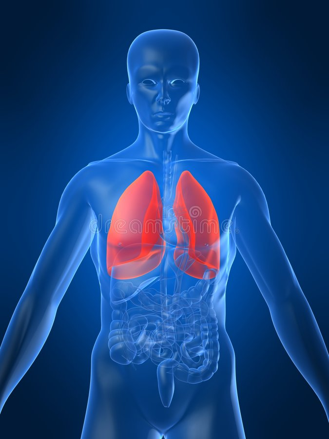 Human lung. 3d rendered anatomy illustration of a human body with lung vector illustration
