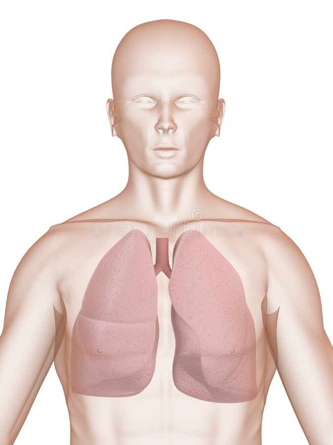 Human lung. 3d rendered anatomy illustration of a human shape with lung stock illustration