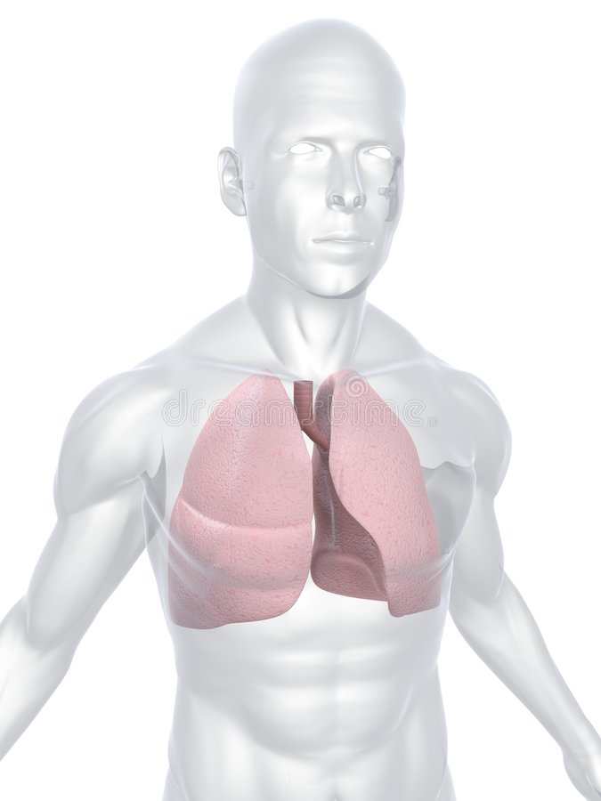 Human lung. 3d rendered anatomy illustration of a human body shape with lung royalty free illustration