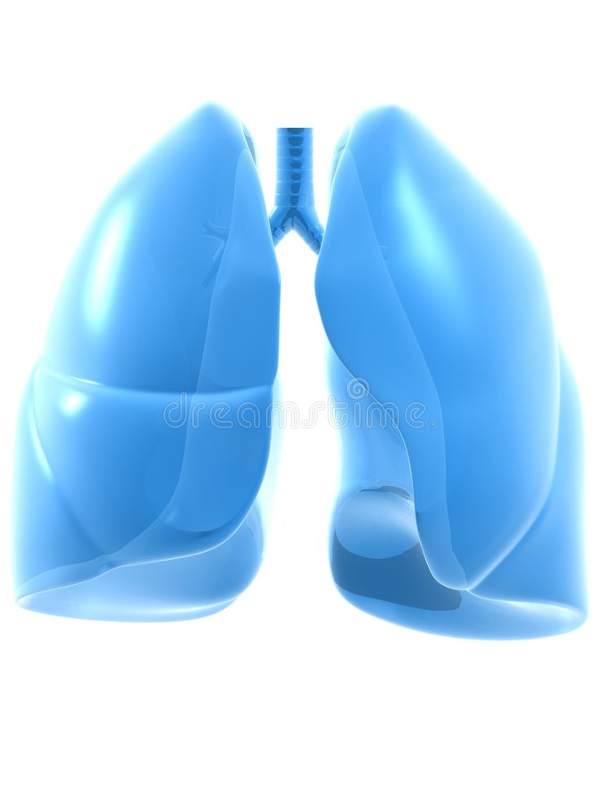 Human lung. 3d rendered anatomy illustration of human lung royalty free illustration