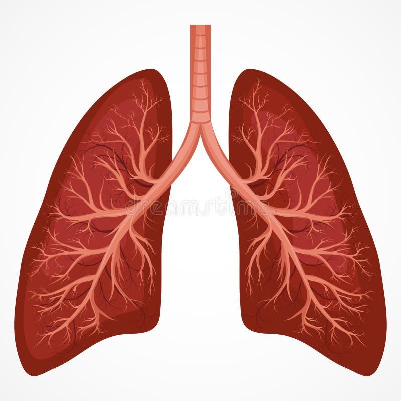 Human Lung anatomy diagram. Illness respiratory cancer graphics. Vector royalty free illustration
